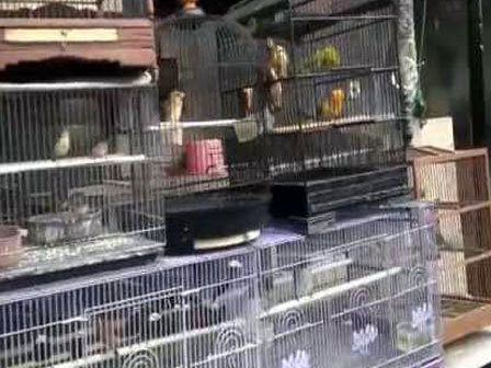 10127 medium warga keluhkan pedagang burung di semper barat