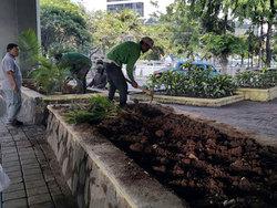 1054 small 10 ribu tanaman hias akan ditanam di jakut