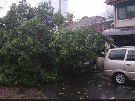 11505 medium pohon tumbang timpa mobil di bidara cina
