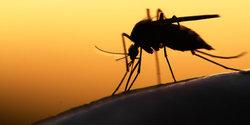 1912 small 7 tips mudah melindungi diri dari serangan nyamuk