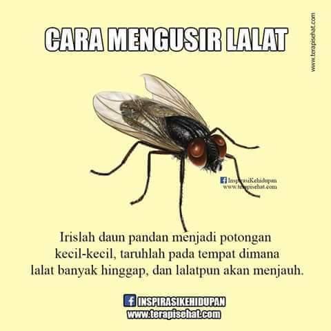 19998 medium 12 lalat