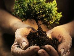 2016 small kecamatan cengkareng terapkan sanksi tanam pohon