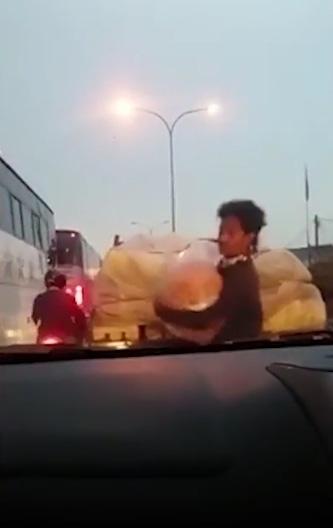 22755 medium bajing loncat garong cabai di pasar bekasi
