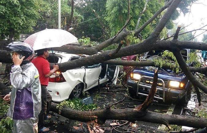 22974 medium pohon tumbang di jatinegara kaum klender