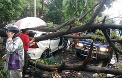 22974 small pohon tumbang di jatinegara kaum klender