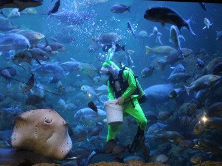 23306 medium sea world ancol akan tampilkan atraksi menyelam