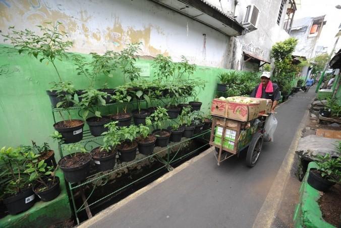 24705 medium seluruh kelurahan di jaksel ditargetkan miliki gang hijau