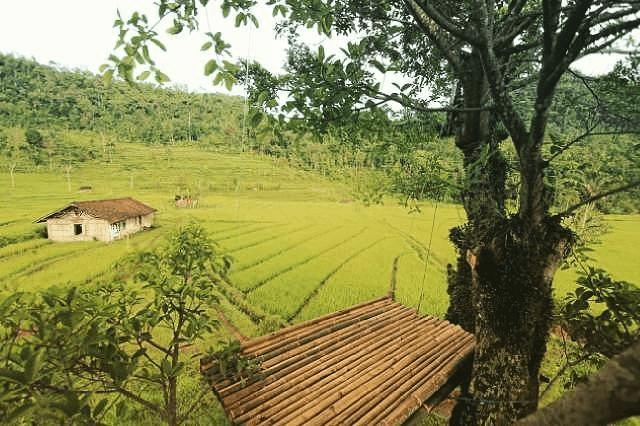 Cemoro Sewu Banyubiru Wan Fajar Di Banyubiru Semarang 16
