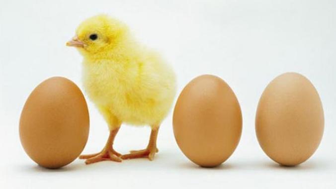 26812 medium hari ini harga ayam 45 ribu per kilogram di pasar argosari