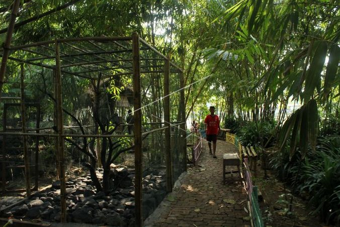 27817 medium konservasi hutan bambu p74nd0 prv
