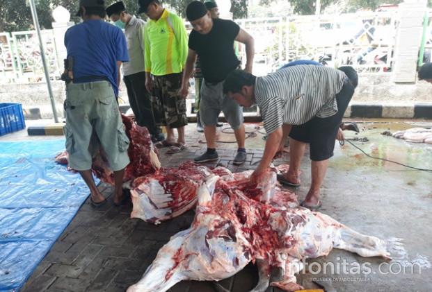 31055 medium pemotongan hewan kurban 23 08 18 13.32 .51