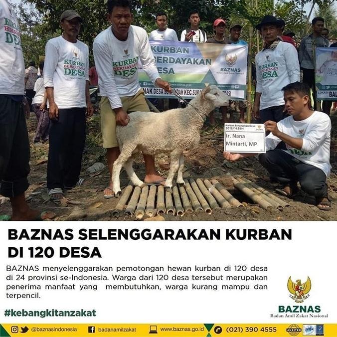 31084 medium baznas selenggarakan kurban di 120 desa