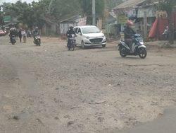 35913 small jalan raya cicadas