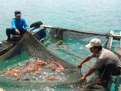 3631 small dki rancang budidaya bagi nelayan eks pasar ikan