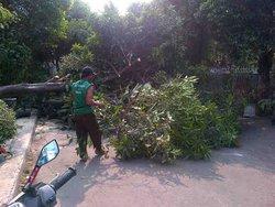 383 small posko penanggulangan pohon tumbang
