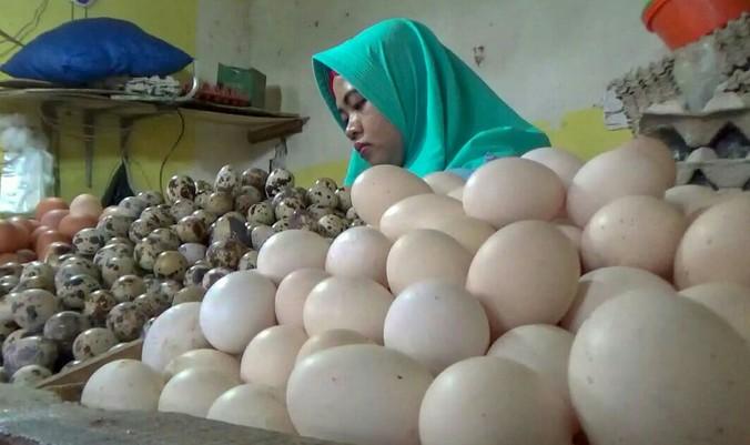 43581 medium telur ayam bogor