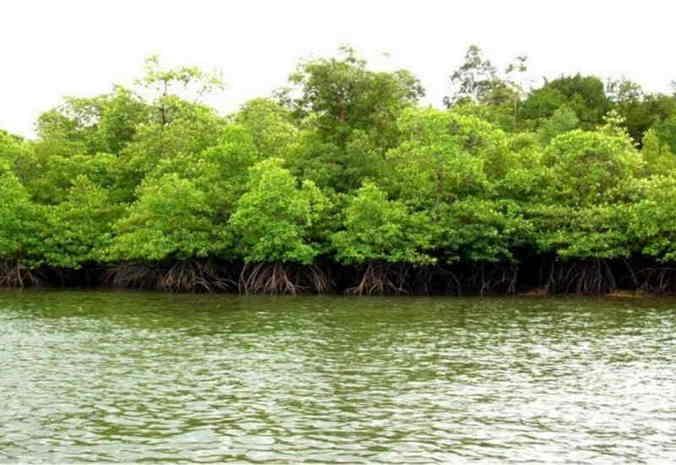 46268 medium hutan pantai dapat kurangi risiko bahaya tsunami