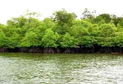 46268 small hutan pantai dapat kurangi risiko bahaya tsunami