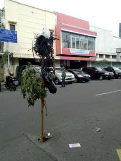 48222 small 4. jalan tumbuh pohon