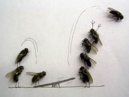 4832 medium ribuan lalat serbu permukiman warga di rambutan