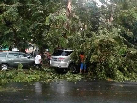 4967 medium pohon tumbang