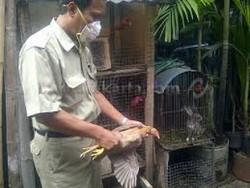 507 small ratusan unggas dirazia di taman sari