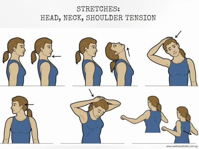 51237 medium stretches neck