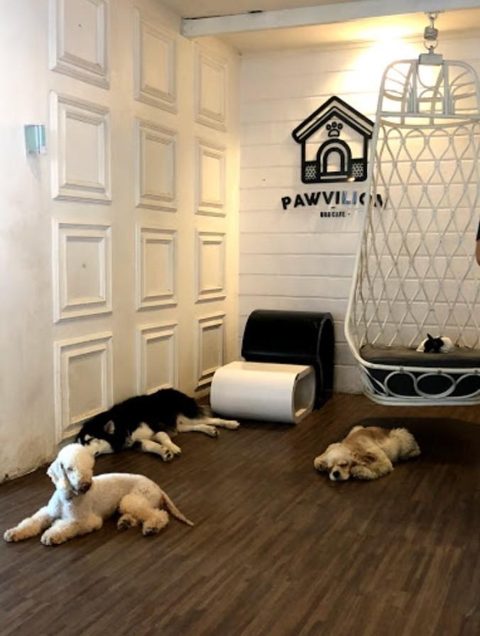 53661 medium %28lowongan kerja%29 dibutuhkan dog handler  dog care taker di pawvillion dog caf%c3%a9 malang %28wawancara langsungwalk in inteview%29