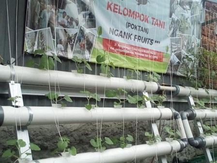 54943 medium warga rt 0102 pengadegan buat urban farming tanaman buah