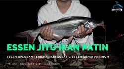 55018 small essen jitu ikan patin terbaru