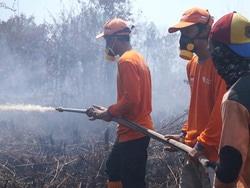 55077 small 10 hektar lahan terbakar di sepakat ii pontianak