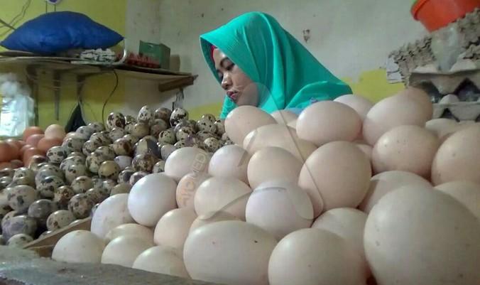 56067 medium telur ayam bogor