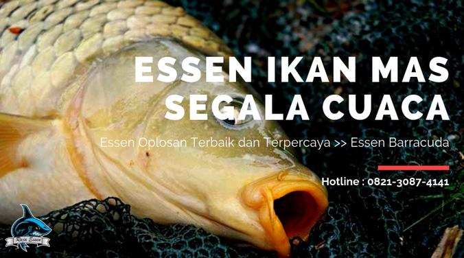 56898 medium essen ikan mas segala cuaca