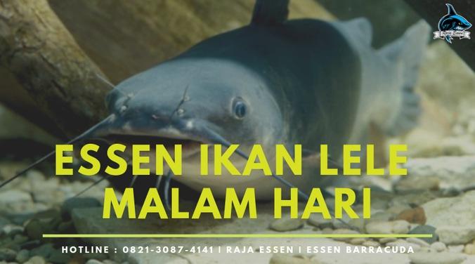 57225 medium essen ikan lele