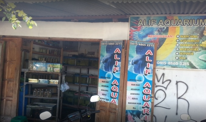 57226 medium %28lowongan kerja%29 dicari karyawan pria untuk jaga toko ikan hias di alif aquarium untuk lulusan sma %28wawancara langsungwalk in interview%29