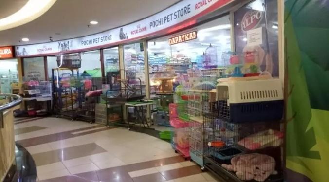 58024 medium %28lowongan kerja%29 dibutuhkan karyawan  karyawati di pochi pet store surabaya untuk lulusan smp %28wawancara langsungwalk in inteview%29