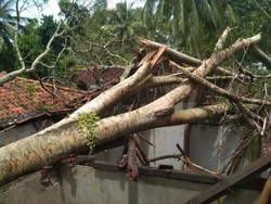 58220 small dua wisatawan tewas tertimpa pohon tumbang di malang