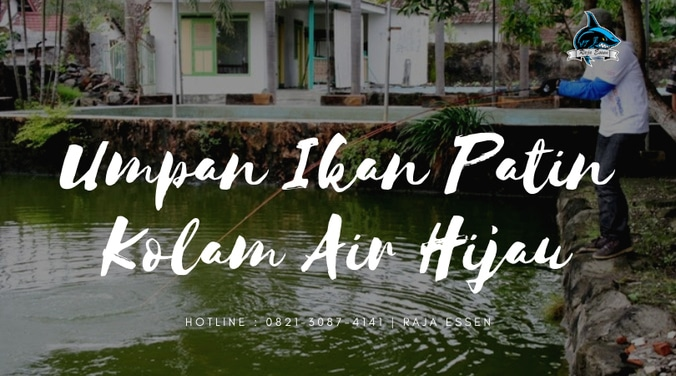 58269 medium umpan ikan patin kolam air hijau