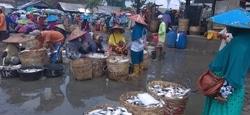 58344 small lahan tambak terendam banjir  harga ikan di lamongan naik
