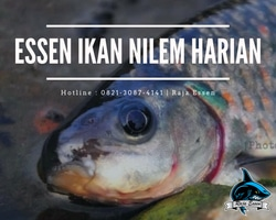 58978 small essen ikan nilem harian