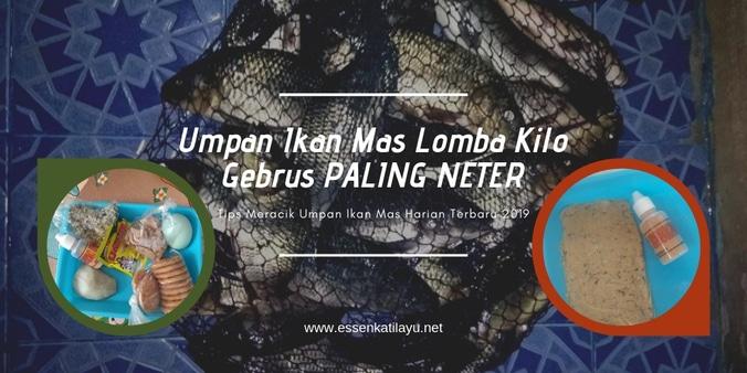 Resep Jitu Umpan Ikan Mas Lomba Kilo Gebrus Terbaru 2019 Jaya Essen Di Jambe Tangerang Kabupaten 2 May 2019 Berita Warga Atmago Warga Bantu Warga