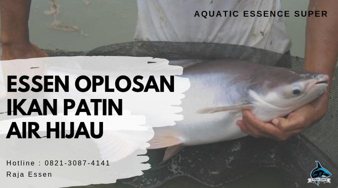 Essen Ikan Patin Air Hijau Paling Joss 100 Raja Essen Tasikmalaya Di Rancaekek Bandung Kabupaten 3 May 2019 Berita Warga Atmago Warga Bantu Warga