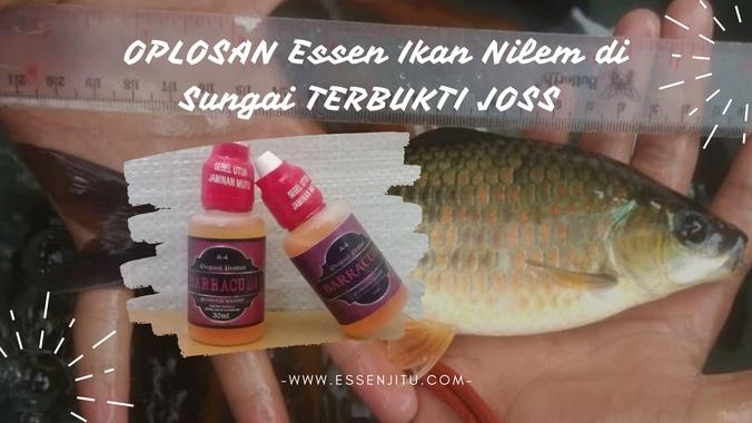 60348 medium essen nilem
