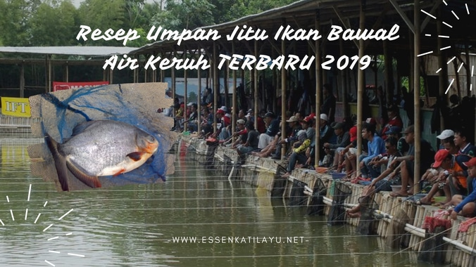 61250 medium resep umpan bawall