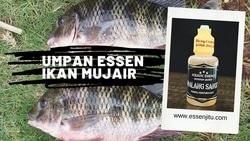 61324 small umpan essen ikan mujarr