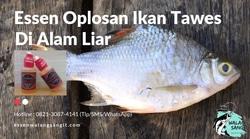 62063 small essen oplosan ikan tawes