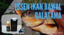 62310 small essen ikan bawal galatama