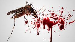624 small pemberantasan sarang nyamuk