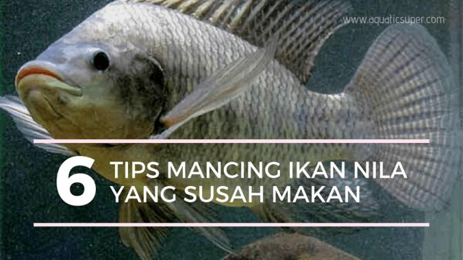 62504 medium tips mancing ikan nila