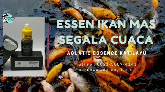 62764 medium essen ikan mas segala cuaca